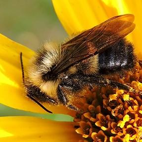 YABM - Yet Another Bee Macro - P600