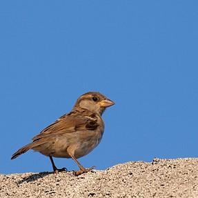 I do like those little Sparrows