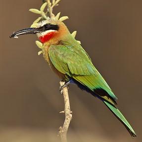 Kruger National Park DA 560 & Sigma 300 2.8