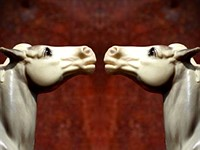 Quick Review: Mirrorgram is fun with reflections