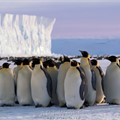 Art Wolfe: In search of Emperor Penguins in Antarctica