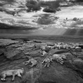 Natural History Museum announces Wildlife Photographer of the Year 2014 winners