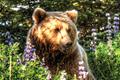 Win an Alaskan photo safari with Datacolor