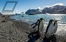 Flying Penguins: Photography in Antarctica