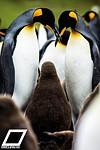 Flying Penguins: Photography in Antarctica