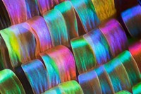 Up close: The beauty of butterfly wings