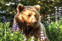 Win an Alaskan photo safari with Datacolor