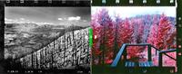 Compare present day 'retakes' of U.S. National Parks to 1930's originals
