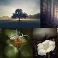 10 outstanding mobile photographers named finalists in annual awards