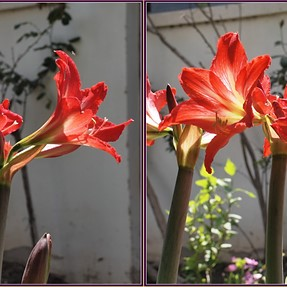 Flowers - cross eyes