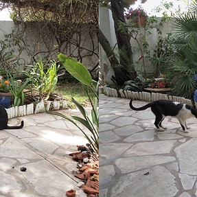 Cats in my yard