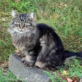 :-)) Sunday Cat! #362 Sep 7, 2014 ((-: