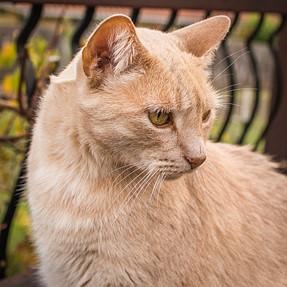 :-)) Sunday Cat! #374 Nov 30, 2014 ((-: