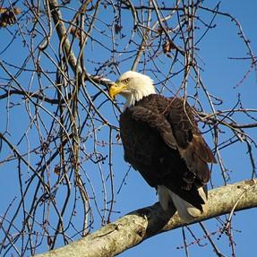 Sx50 found an eagle