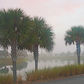 Impressionistic view of this Foggy Florida Morning