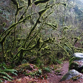 I <3 the Northwest: Larch mountain trail
