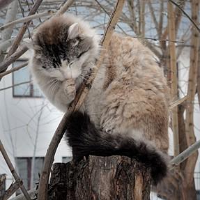 Nikon P7800 - camera for portraits of cats