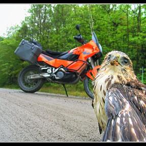 A KTM and a Bird