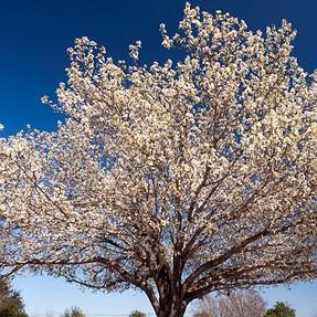 Is Spring just around the corner?