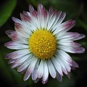 P900 + Raynox 250_flowers