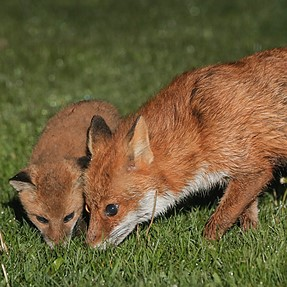 New Fox Kit still photos following on from yesterday's video