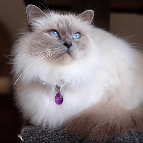 :-)) Sunday Cat! #404 June 28, 2015 ((-: