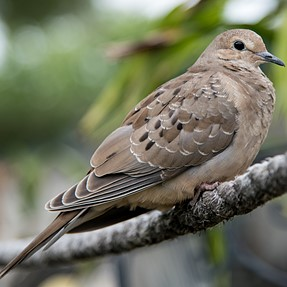 Young Dove let me get close