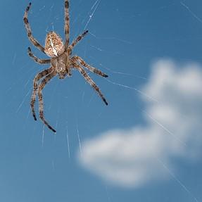 Spider with cloud storage