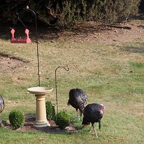 Bird Feeder & Birds