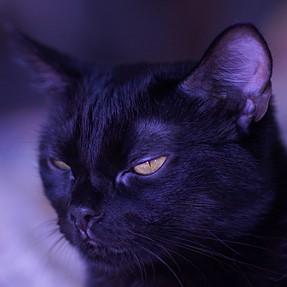 Black cat and Minolta 84/1.4