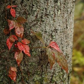Fall colors sigma dp2 merrill full rez