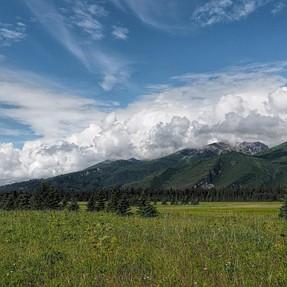 Grizzly bear pics from Alaska (E-M1, 40-150 PRO)