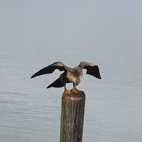American Eagle... well... sort of. :-)