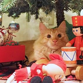 :-)) Sunday Cat! #429 December 20, 2015 ((-: