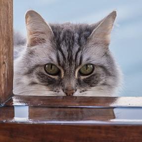:-)) Sunday Cat! #433 January 17, 2016 ((-: