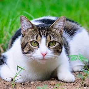 :-)) Sunday Cat! #435 January 31, 2016 ((-: