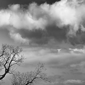 Tree Seeking Moisture
