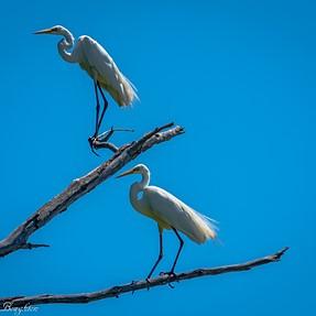 Volo Bog Birds